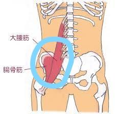 腸腰筋など